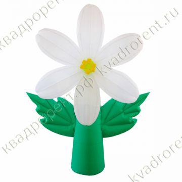 Воздушная белая лилия